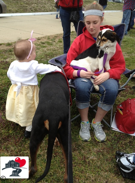 This lass followed Walter all over for a bit; Beagle mix Pearl with volunteer Maddie