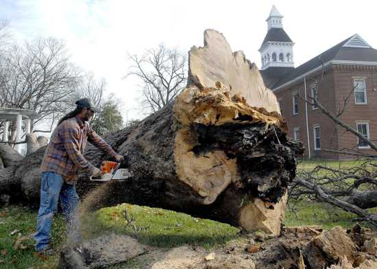 Oak Tree Removed From Common Pleas Courthouse Lawn