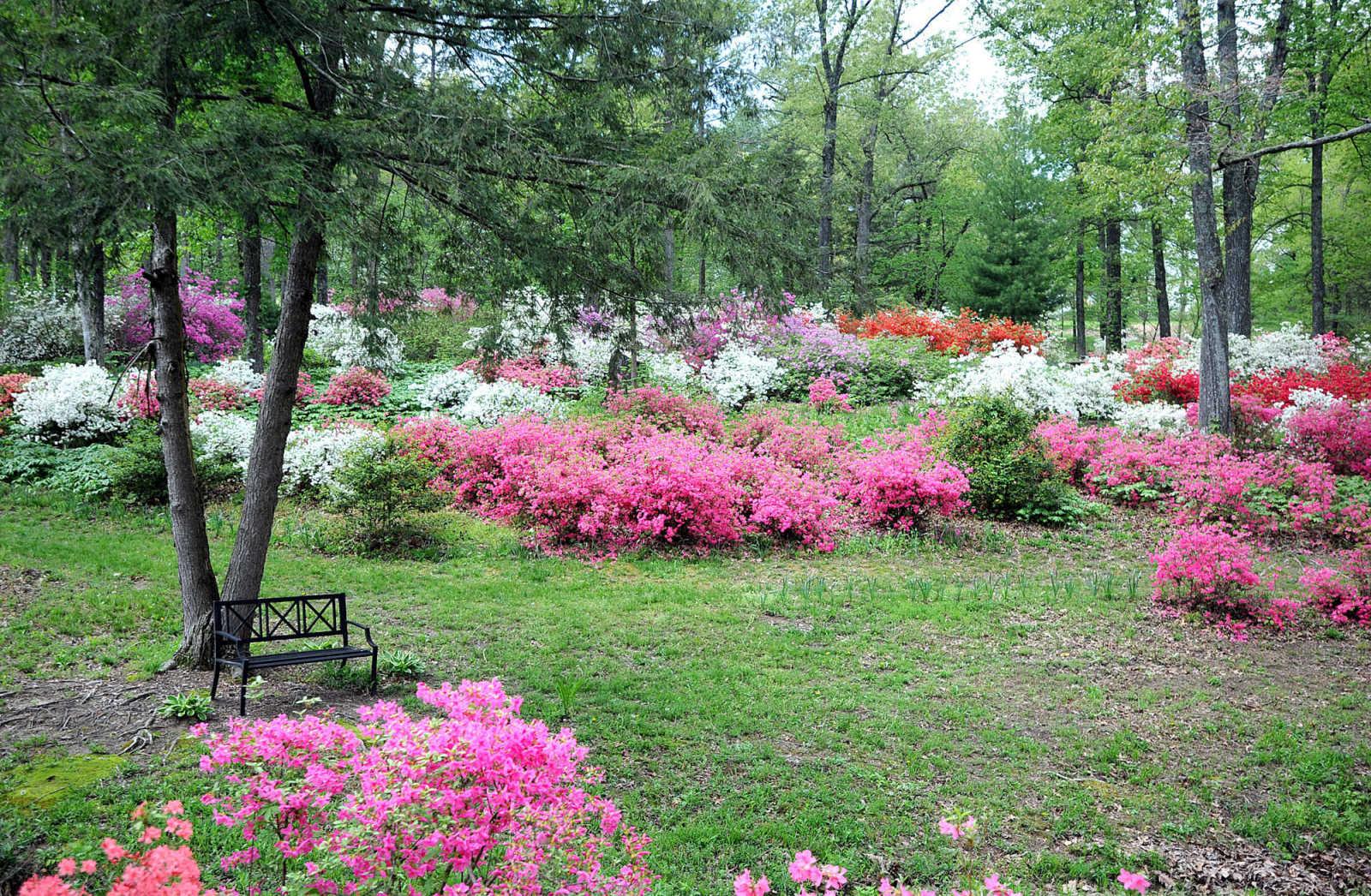Photo Gallery Pinecrest Azalea Gardens 4 4 12