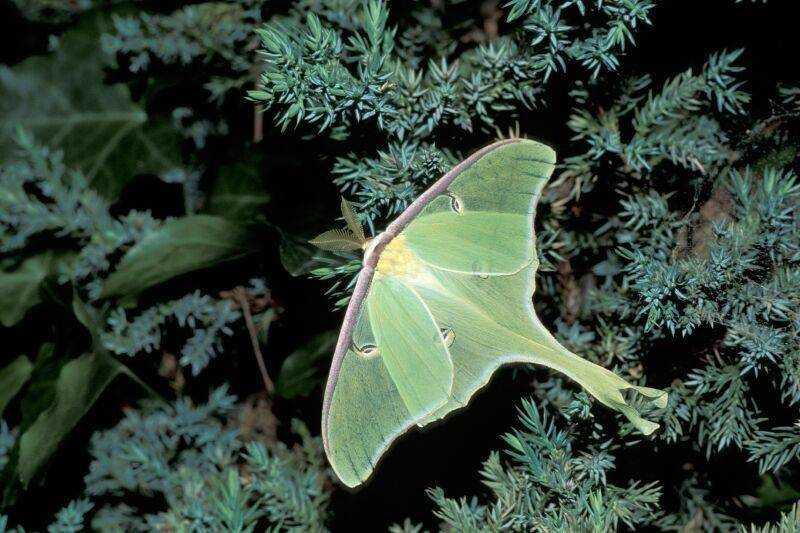 Blog Luna Moth No Mouth One Week To Live 4610 Southeast