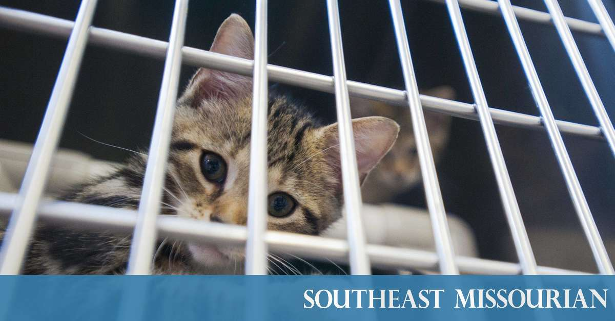 Local News Humane Society Closes Door On Feral Cats Says Not Equipped To Handle Them 6 7 19 Southeast Missourian Newspaper Cape Girardeau Mo