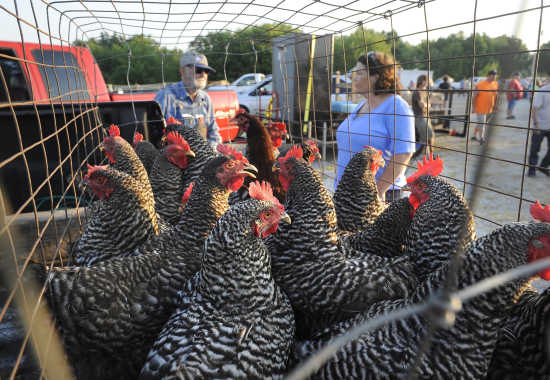 Photo gallery: Fruitland Swap Meet (7/21/18)   Southeast