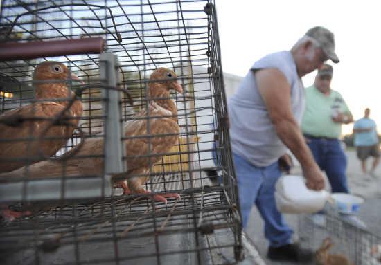 Photo gallery: Fruitland Swap Meet (7/21/18) | Southeast