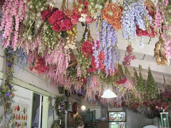 Community Drying Flowers 8 4 18 Southeast Missourian Newspaper Cape Girardeau Mo