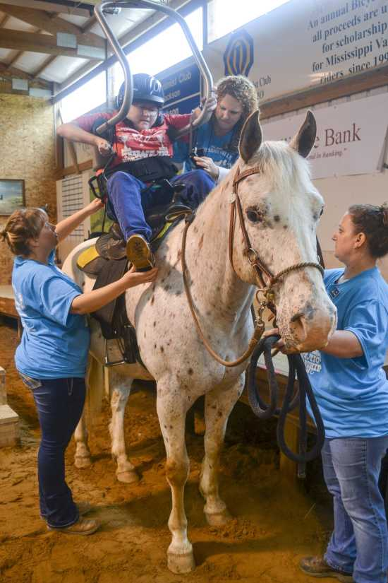 therapy horses near me