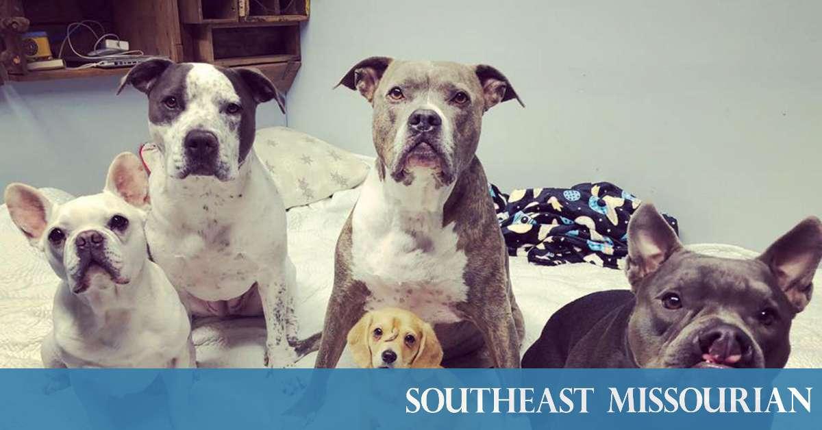 Pulik Lover Dog Love Accidental Death Hoodie